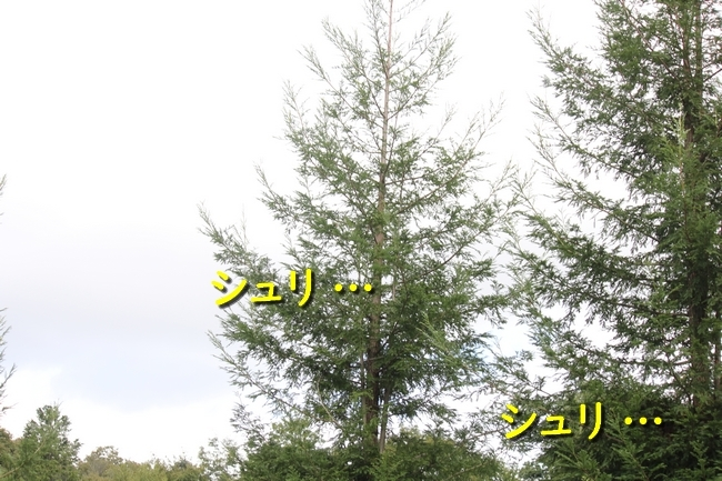 IMG_09891019.jpg