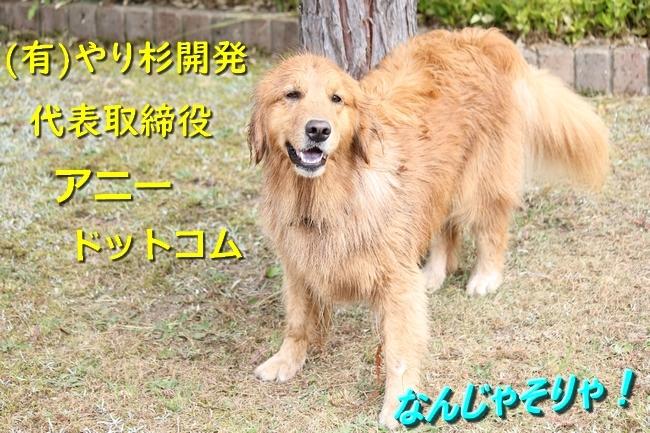 IMG_09971019.jpg