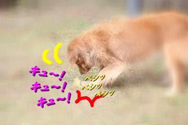 IMG_10081017.jpg