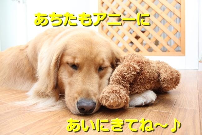 IMG_6949053111.jpg