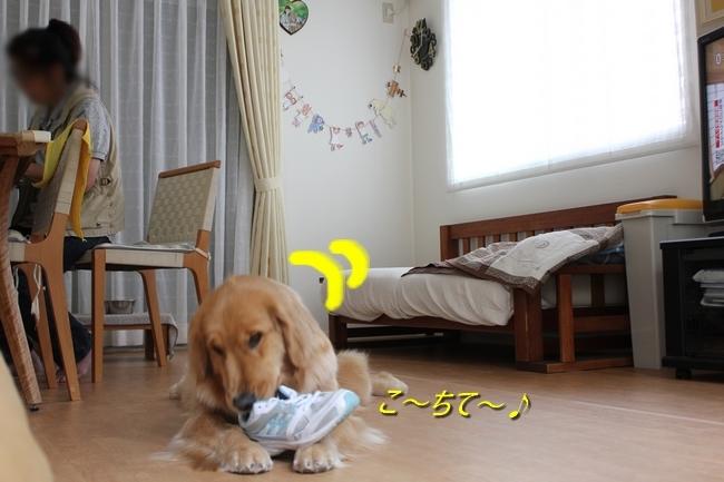 IMG_80480527.jpg