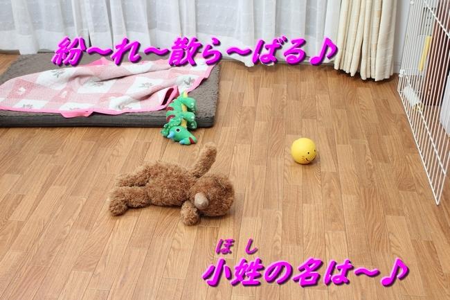 IMG_81160531.jpg