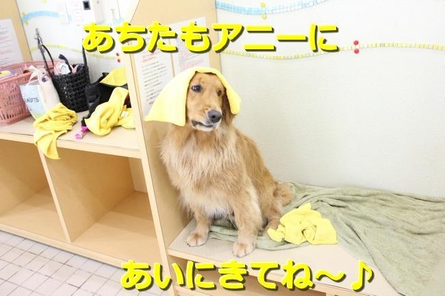 IMG_82220613.jpg