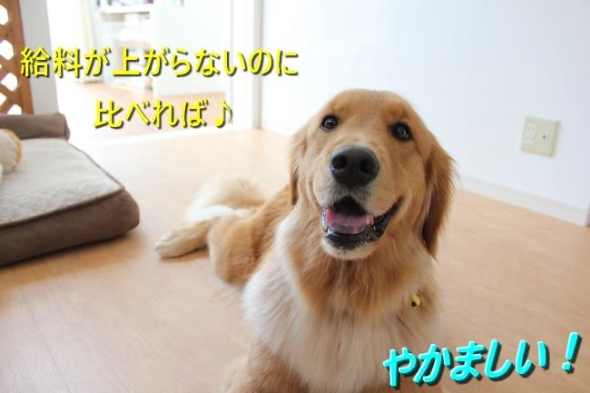 IMG_90450714.jpg