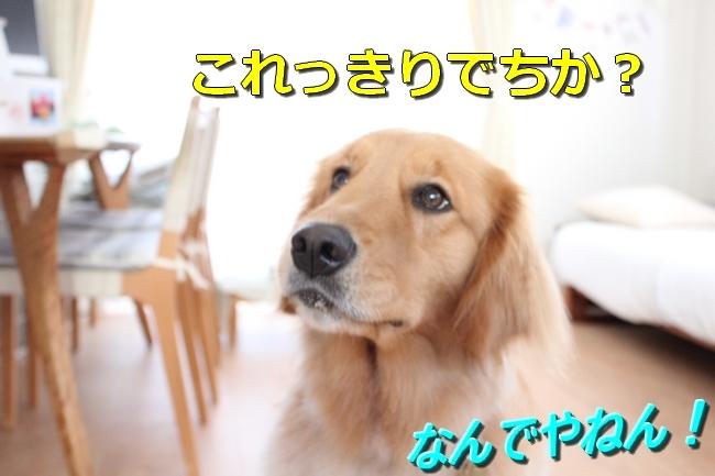 IMG_90960722.jpg