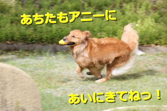 IMG_95020811.jpg