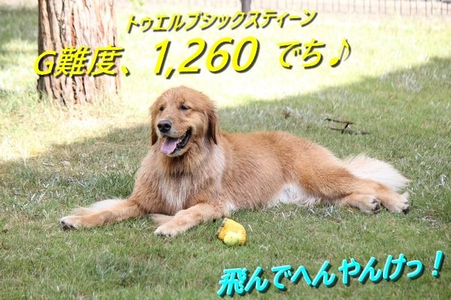 IMG_95040811.jpg