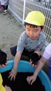 きりん組 種うえ (3)