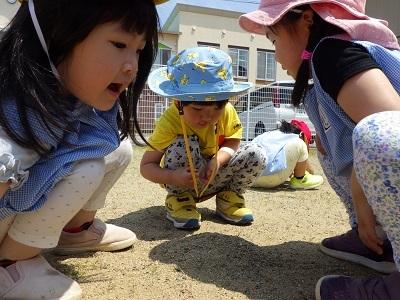 ぺんぎん組 砂の山3