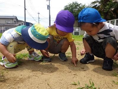うさぎ組 第二園庭④