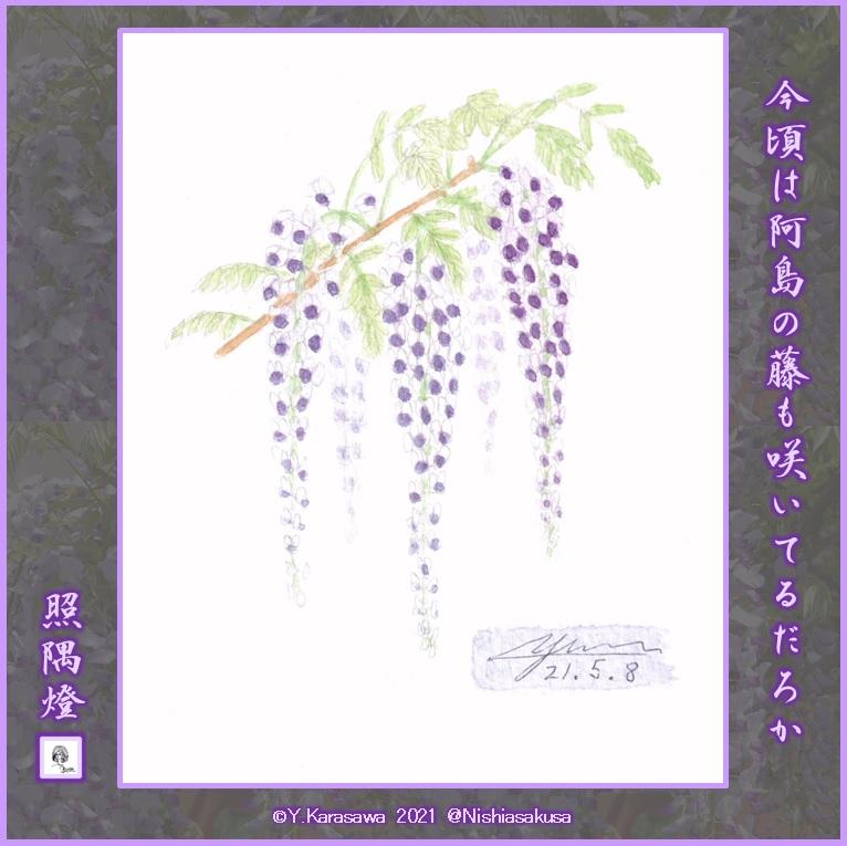 210508藤の花LRG