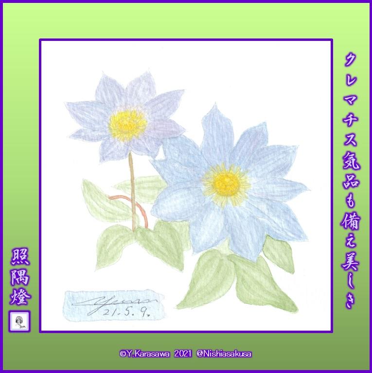 210509クレマチス青紫LRG