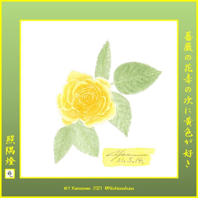 210514黄色い薔薇LRG