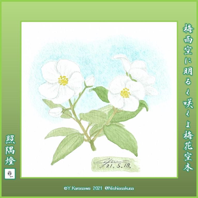 210518梅花空木LRG