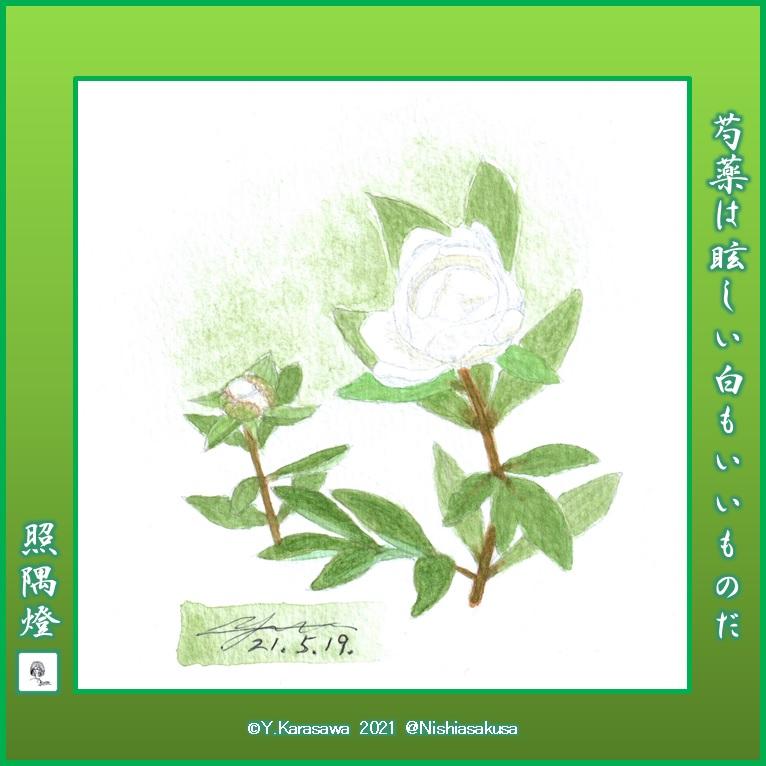 210519芍薬白LRG