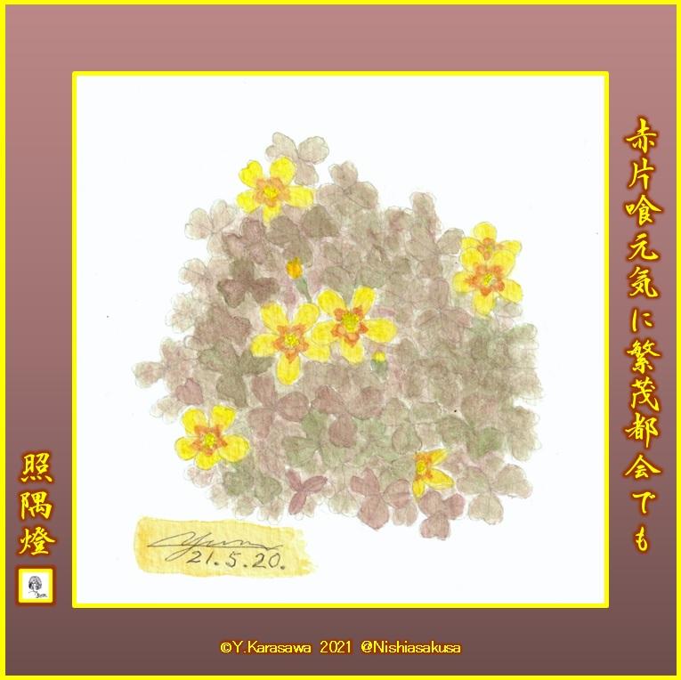 210520赤片喰の花LRG