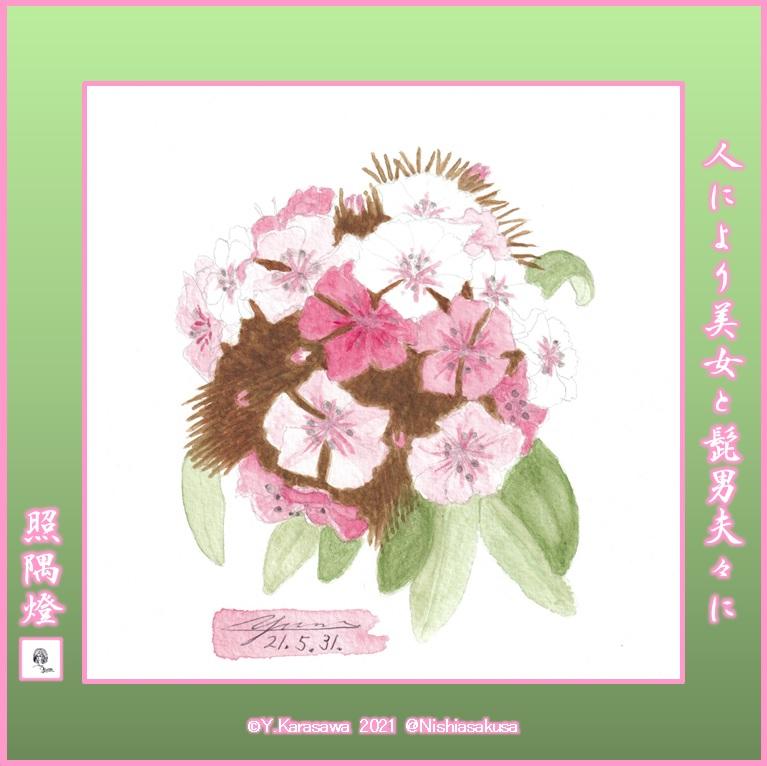 210531美女撫子ピンク濃淡LRG