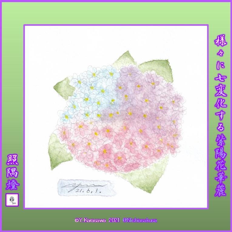 210601紫陽花紫青薄紅斑LRG