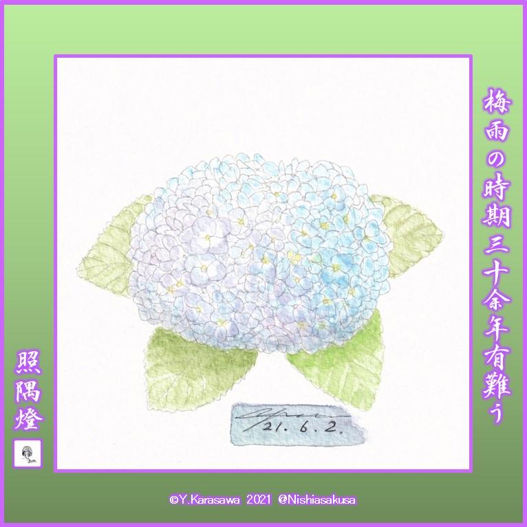 210602我が家の紫陽花LRG