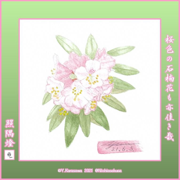 210605桜色の石楠花LRG