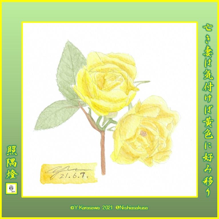 210607黄色い薔薇LRG