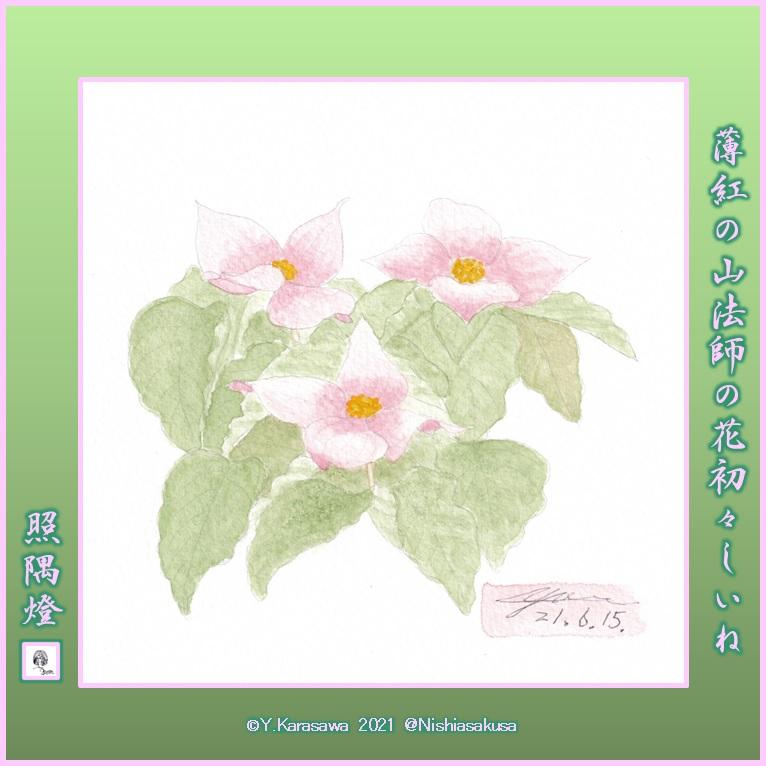 210615紅花山法師LRG