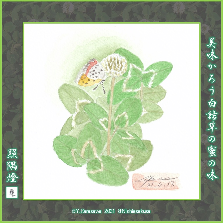 210617白詰草に紅シジミLRG