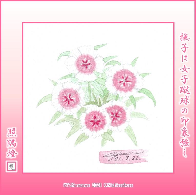 210722白にピンク花芯の撫子LRG
