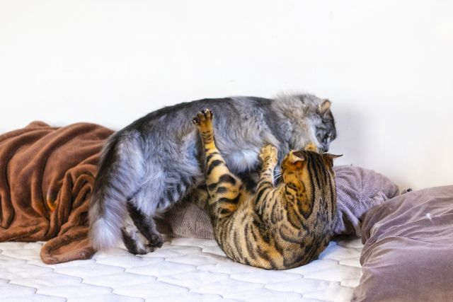 ボンドのようにくっついた猫