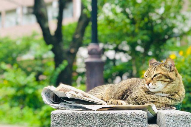 大学芋の語源を 学ぶ猫