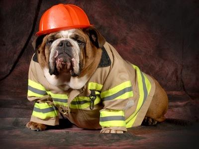 Dog Firefighter