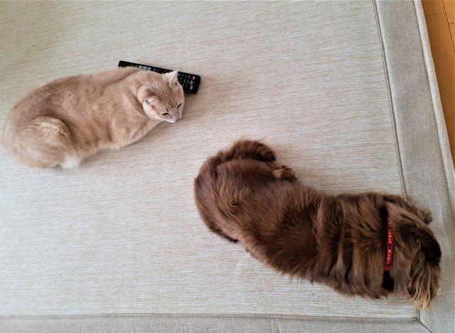 犬と猫の会話 窓の意味は?