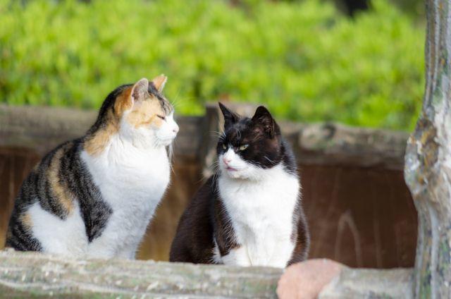 口上手な猫