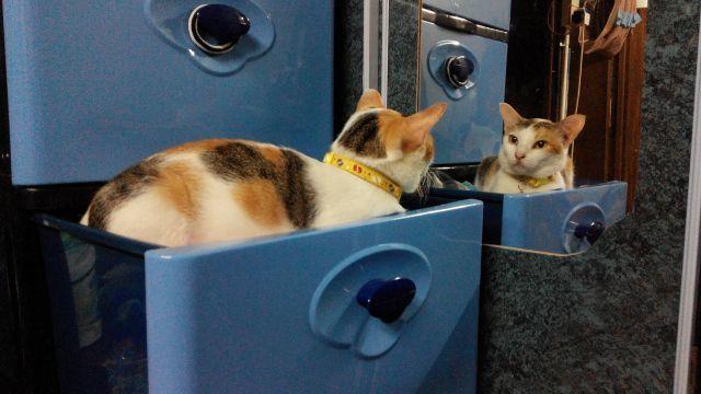 猫の会話 「奇行」って何?