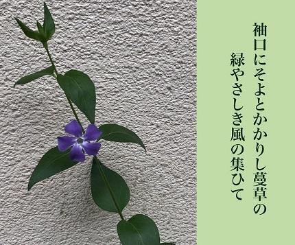 緑やさしき6 - コピー