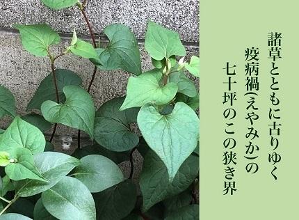 諸草と6 - コピー