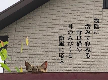 野良猫6 - コピー