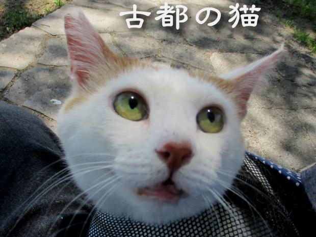 shiro2021m.jpg