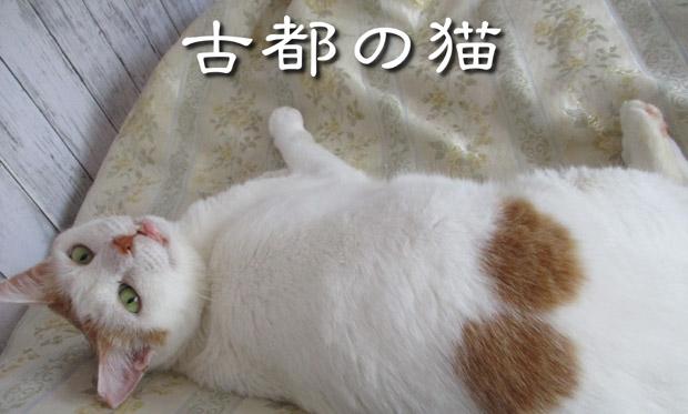 shiro2021new.jpg