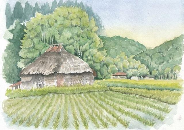 s-稲田と茅葺の家