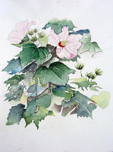 s-酔芙蓉の花