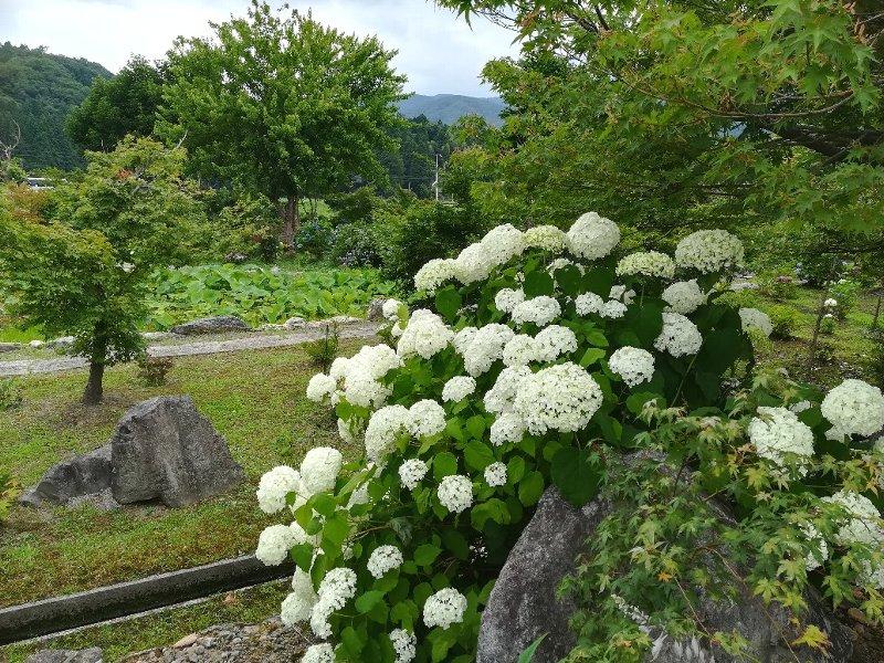 zenchoji-nagahama-021.jpg